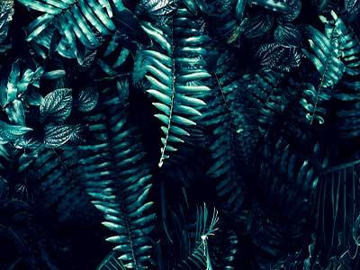 pupitre_2021_03_banners_400x300_jungla-sin-texto-sin-pilu02